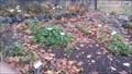 Image for Kräutergarten auf dem alten Friedhof - Remagen - RLP - Germany