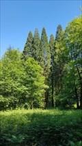 Image for Arboretum de la Petite Hulle - Profondeville - Belgique