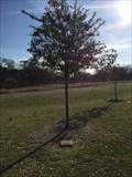 Image for Joanna Gordon  - Frisco, TX, US