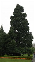 Image for Sequoia at the BC Parliament Building