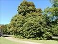 Image for Royston House Magnolia - Historic Washington State Park in Washington, AR