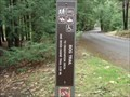 Image for Bog Trail - Philipsburg, Pennsylvania