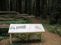 Image for Mahan Plaque Trailhead - Humboldt Redwoods SP - California