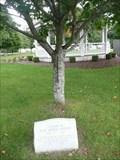 Image for Mary Herbert Tree - North Hampton NH
