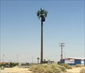 Image for Palm Tree - Barstow, CA