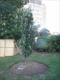 Image for AIDS Memorial Tree - Toronto, ON