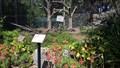 Image for Hope Brandt - Oakland, CA