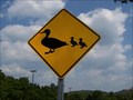 Image for Duck Crossing - Nashville, TN