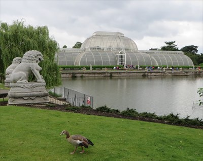 veritas vita visited Royal Botanic Gardens