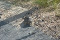 Image for Leopard Turtle Crossing - Kruger Park