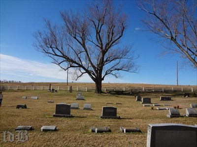 The omnivorous tree seen in the background. Unfortunately, one of the headstones fell prey.