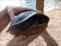 Image for Turtle Crossing - Lake Eola - Orlando, Florida, USA.
