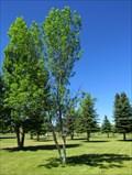 Image for Lila Johnson Merrill - Fort Harrison, Montana