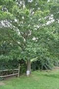 Image for Oak Tree -- near Magna Carta  Memorial, Old Windsor, Surrey, UK