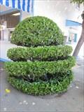 Image for San Jose Flea Market Topiary - San Jose, CA