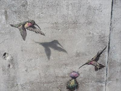 Deux magnifiques colibris.