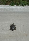 Image for Painted Turtle - Sioux Falls, South Dakota
