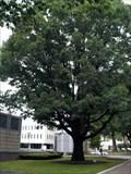 Image for George Washington Bicentennial Tree - Trenton, NJ