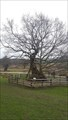 Image for Queen Adelaide's Oak - Bradgate Park, Leicestershire