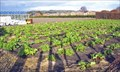 Image for Claytons Strawberry Farm - Newburgh, Lancashire UK