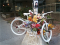 Image for Ghost Bike - Nusrat Jahan - Laurier & Lyon, Ottawa, Ontario