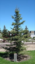 Image for Roger G. Wing dedicated tree - Evanston, Wyoming