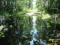 Image for Cary State Forest Bridgeless Water Crossing - Bryceville, FL