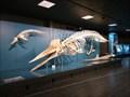 Image for Zoologisches Museum - Hamburg, Deutschland
