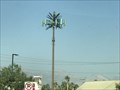 Image for Duneville St Palm Tree - Las Vegas, NV