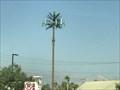 Image for Duneville St Palm Tree - Las Vegas, NV