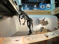 Image for Rex in Pieces, Wyoming State Museum - Cheyenne, WY