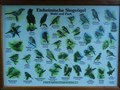 Image for Info Board 'Singvögel' - Bondorf, Germany, BW