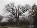 Image for Gudgel White Oak, Menard County, Illinois.