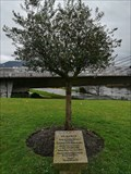 Image for Olive tree of the Olympic champions - Ourense, SP