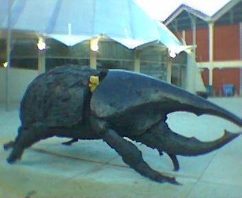 Bristol's Bug
