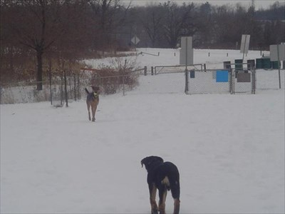 My dogs with the parking lot and gate entrance in the background