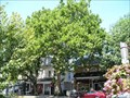 Image for Historic Buttonwood Tree - Haddonfield Historic District - Haddonfield, NJ