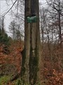 Image for Rotbuche vertilgt ihr Schild - Barsinghausen, NI, Germany