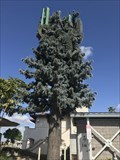 Image for Shelter Island Tree - San Diego, CA