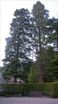 Image for Redwood, Brockhole, Cumbria