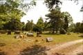 Image for Chatsworth Cemetery - Chatsworth, NJ