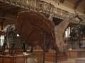 Image for Musée National d'Histoire Naturelle - Paris, Fance