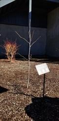 Image for Hiroshima Peace Trees at KUHS - Klamath Falls, OR