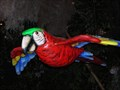 Image for Macaw  at The Rainforest Cafe - San Francisco