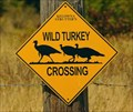 Image for Wild Turkey Crossing - Trail, British Columbia