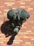 Image for Drosophila Fly Head - Eugene, Oregon