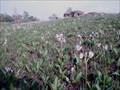 Image for Manikowski Prairie in the Spring, Goose Lake, IA
