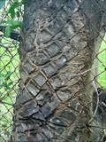 Image for Fence-eating Ash Tree - Putney, London, UK