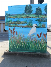 Birds in Slough, Watsonville, CA
