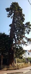 Image for Sequoia géant, rue Louis Dupont - Clamart - France